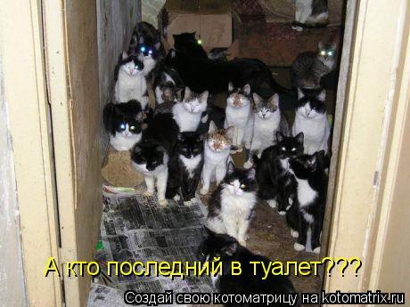 Котоматрица: А кто последний в туалет???