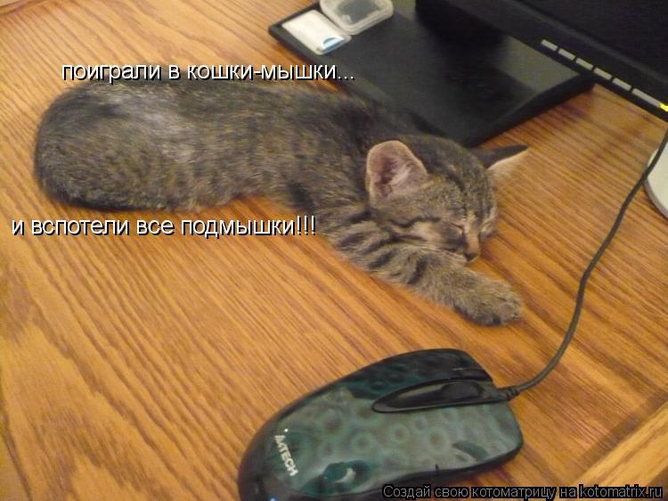 Котоматрица: поиграли в кошки-мышки... и вспотели все подмышки!!!