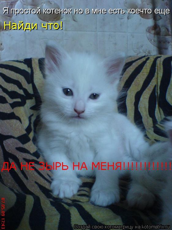 Котоматрица: Я простой котенок но в мне есть коечто еще Найди что! ДА НЕ ЗЫРЬ НА МЕНЯ!!!!!!!!!!!!!
