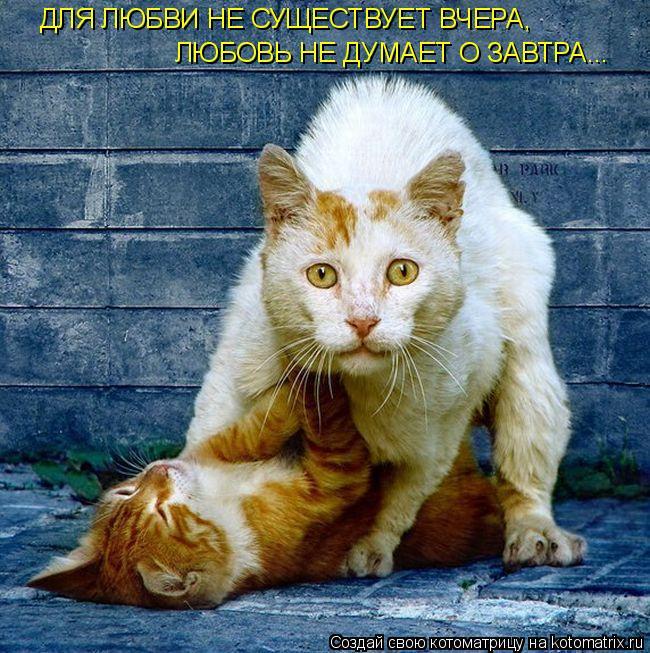 Котоматрица: ДЛЯ ЛЮБВИ НЕ СУЩЕСТВУЕТ ВЧЕРА, ЛЮБОВЬ НЕ ДУМАЕТ О ЗАВТРА...