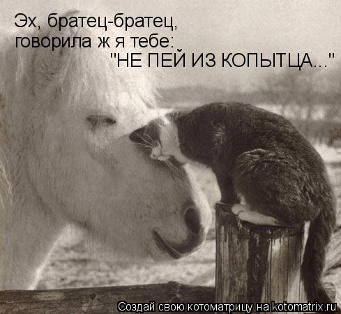 """Котоматрица: Эх, братец-братец, говорила ж я тебе: """"НЕ ПЕЙ ИЗ КОПЫТЦА..."""""""