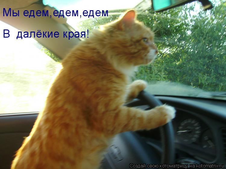 Котоматрица: Мы едем,едем,едем В  далёкие края!