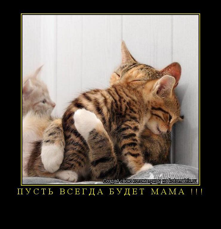 Котоматрица: Пусть всегда будет МАМА !!!