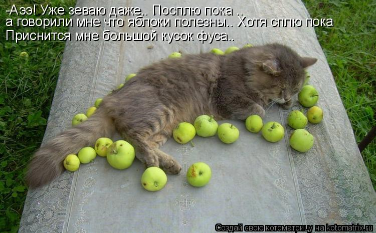 Котоматрица: -Аээ! Уже зеваю даже.. Посплю пока .. а говорили мне что яблоки полезны.. Хотя сплю пока  Приснится мне большой кусок фуса..