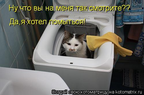 Котоматрица: Ну что вы на меня так смотрите?? Да,я хотел помыться! Ну что вы на меня так смотрите??
