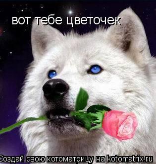 Котоматрица: вот тебе цветочек