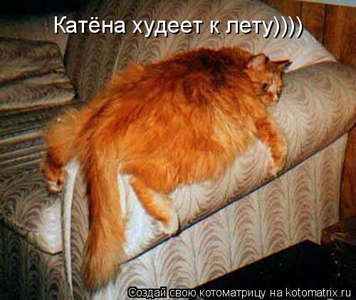 Котоматрица: Катёна худеет к лету))))