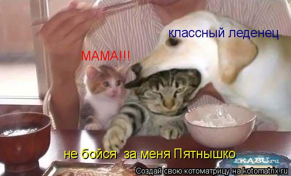 Котоматрица: МАМА!!! не бойся  за меня Пятнышко классный леденец
