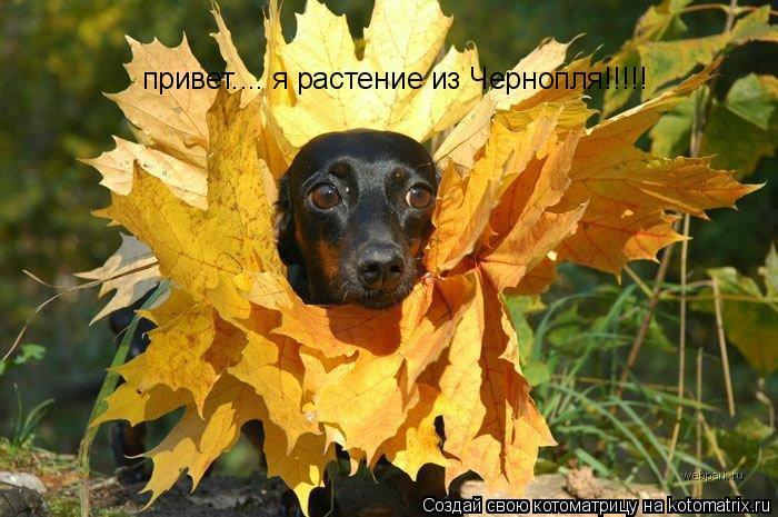 Котоматрица: привет.... я растение из Чернопля!!!!!