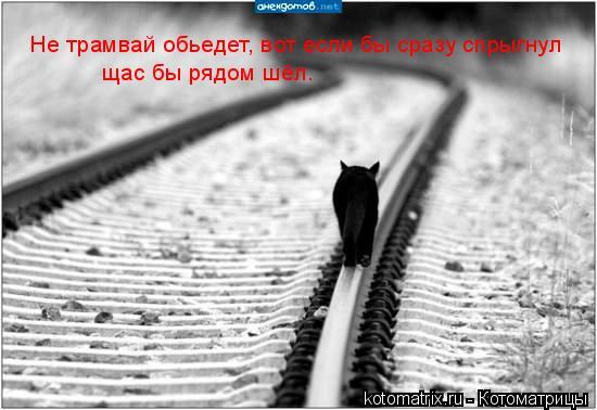 Котоматрица: Не трамвай обьедет, вот если бы сразу спрыгнул  щас бы рядом шёл.