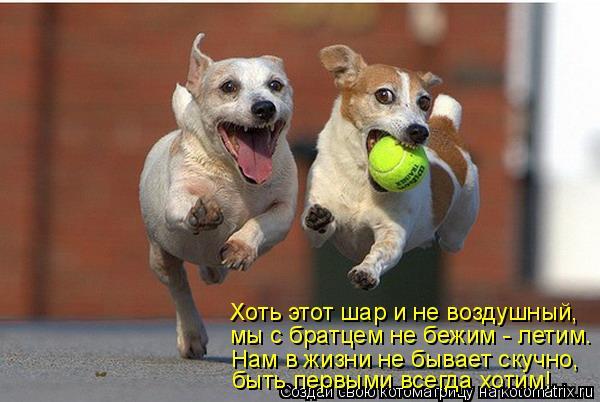 Котоматрица: Хоть этот шар и не воздушный, мы с братцем не бежим - летим. Нам в жизни не бывает скучно, быть первыми всегда хотим!