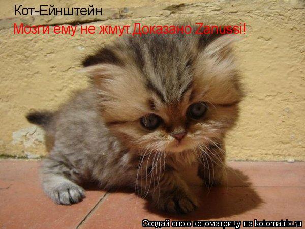 Котоматрица: Кот-Ейнштейн Мозги ему не жмут.Доказано Zanussi!