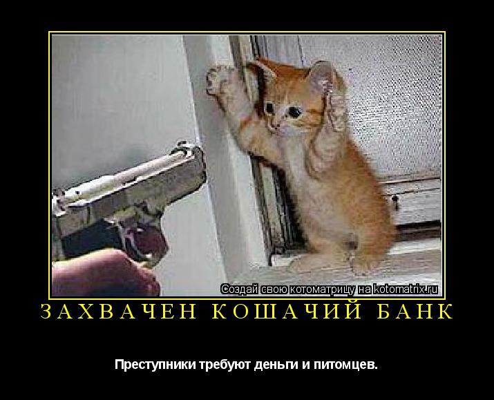 Котоматрица: Захвачен кошачий банк Преступники требуют деньги и питомцев.
