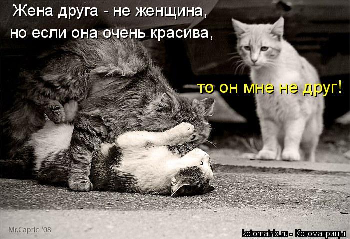 Котоматрица: Жена друга - не женщина,  но если она очень красива,  то он мне не друг!