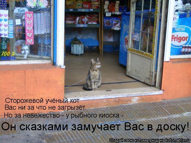 Котоматрица: Сторожевой учёный кот Вас ни за что не загрызёт. Но за невежество - у рыбного киоска -  Он сказками замучает Вас в доску!
