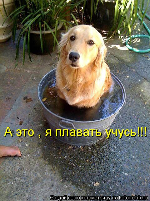 Котоматрица: А это , я плавать учусь!!!