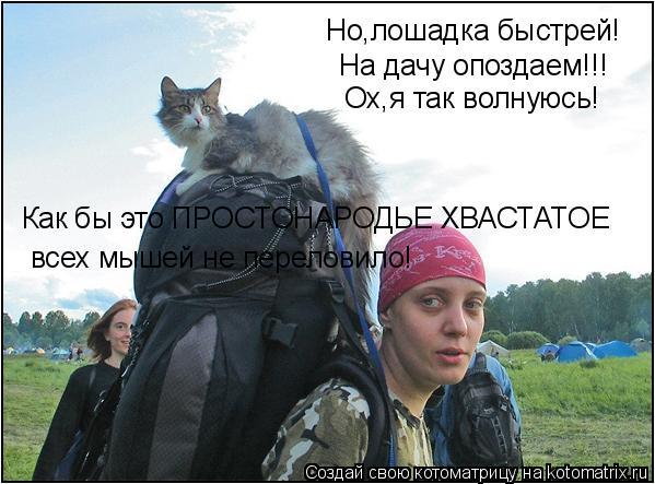 Котоматрица: Но,лошадка быстрей! На дачу опоздаем!!! Ох,я так волнуюсь! Как бы это ПРОСТОНАРОДЬЕ ХВАСТАТОЕ всех мышей не переловило!