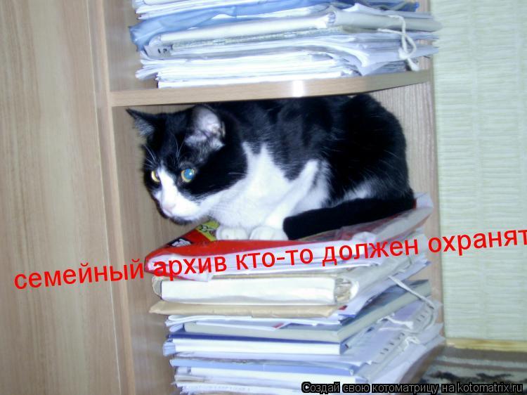 Котоматрица: семейный архив кто-то должен охранять!