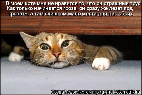 Котоматрица: В моем коте мне не нравится то, что он страшный трус.  Как только начинается гроза, он сразу же лезет под   кровать, а там слишком мало места дл