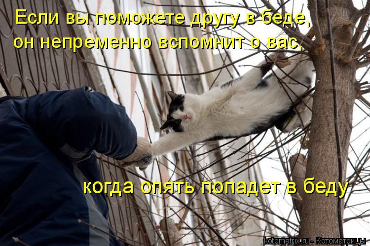Котоматрица: Если вы поможете другу в беде,  он непременно вспомнит о вас,  когда опять попадет в беду