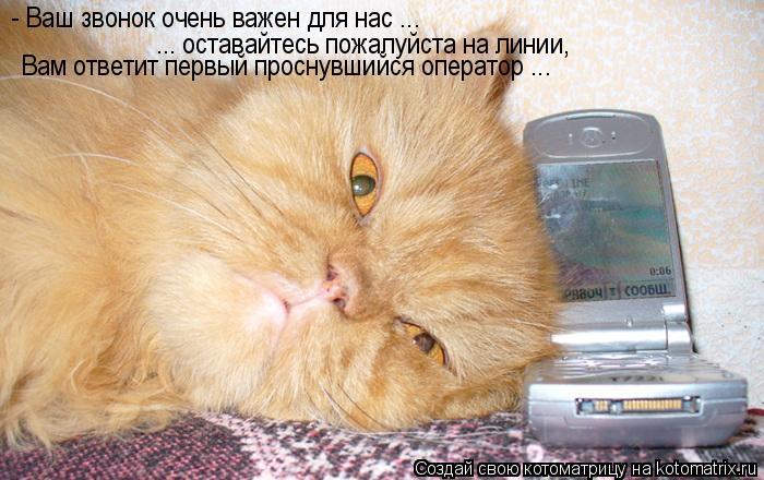 Котоматрица: - Ваш звонок очень важен для нас ...   ... оставайтесь пожалуйста на линии,  Вам ответит первый проснувшийся оператор ...