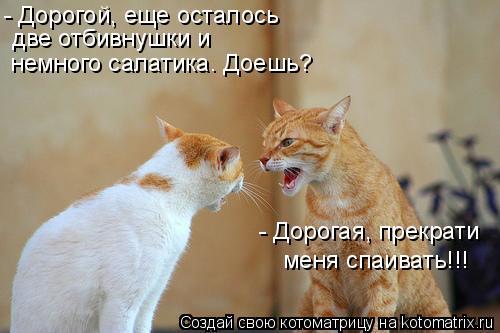 Котоматрица: - Дорогая, прекрати  меня спаивать!!! - Дорогой, еще осталось  две отбивнушки и  немного салатика. Доешь?