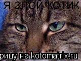 Котоматрица: я злой котик