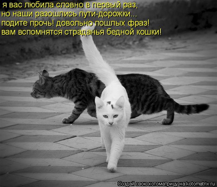 Котоматрица: я вас любила словно в первый раз, но наши разошлись пути-дорожки... подите прочь! довольно пошлых фраз! вам вспомнятся страданья бедной кошки