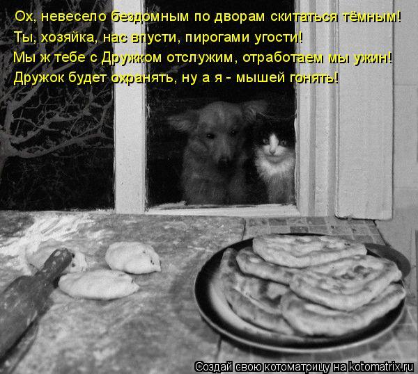 Котоматрица: Ох, невесело бездомным по дворам скитаться тёмным! Ты, хозяйка, нас впусти, пирогами угости! Мы ж тебе с Дружком отслужим, отработаем мы ужин!