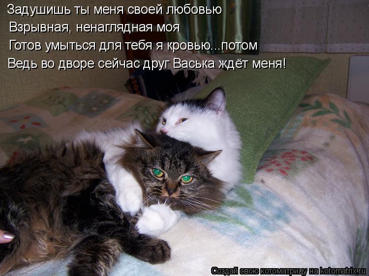 Котоматрица: Задушишь ты меня своей любовью Взрывная, ненаглядная моя Готов умыться для тебя я кровью...потом Ведь во дворе сейчас друг Васька ждёт меня!