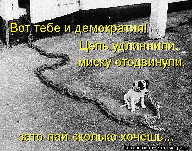 Котоматрица: Вот тебе и демократия! Цепь удлиннили, миску отодвинули, зато лай сколько хочешь...