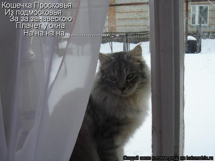 Котоматрица: Кошечка Просковья Из подмосковья За за занавескою  Плачет у окна На на на на......................