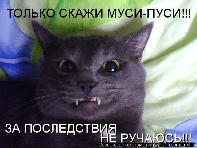 Котоматрица: ТОЛЬКО СКАЖИ МУСИ-ПУСИ!!! НЕ РУЧАЮСЬ!!! ЗА ПОСЛЕДСТВИЯ