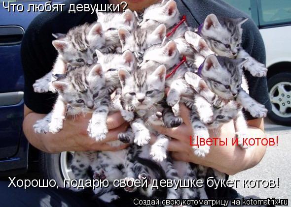 Котоматрица: Цветы и котов! Хорошо, подарю своей девушке букет котов! Что любят девушки?