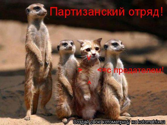 Котоматрица: Партизанский отряд!  <=с предателем! > ^ v