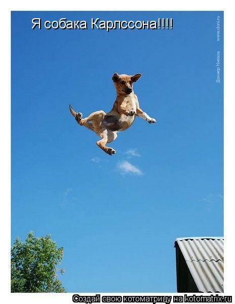Котоматрица: Я собака Карлссона!!!!