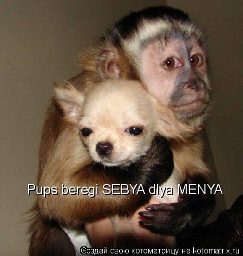 Котоматрица: Pups beregi SEBYA dlya MENYA