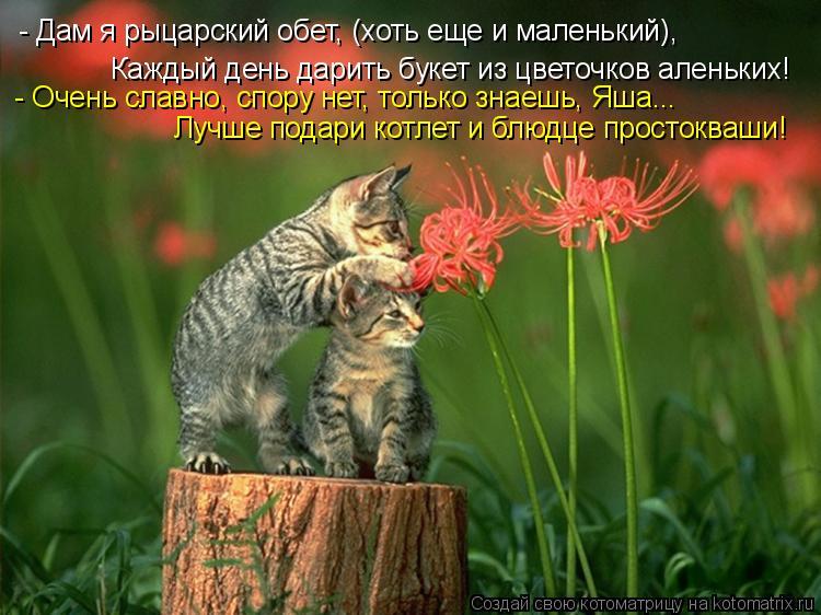 Котоматрица: - Дам я рыцарский обет, (хоть еще и маленький), Каждый день дарить букет из цветочков аленьких! - Очень славно, спору нет, только знаешь, Яша... Л