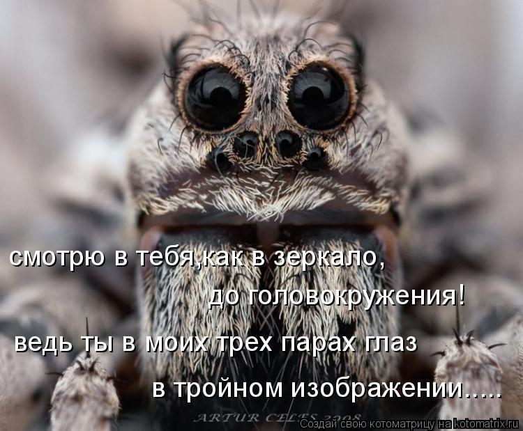 Котоматрица: смотрю в тебя,как в зеркало, до головокружения! ведь ты в моих трех парах глаз в тройном изображении.....