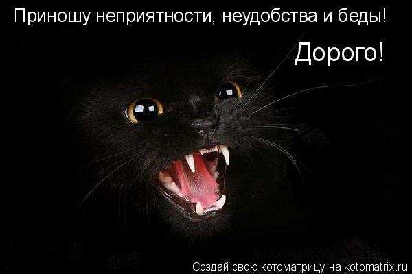 Котоматрица: Приношу неприятности, неудобства и беды! Дорого! Приношу неприятности, неудобства и беды! Дорого!