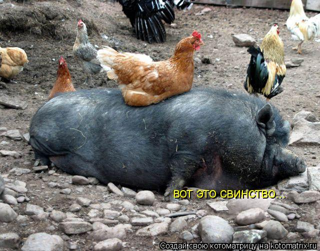 Котоматрица: вот это свинство...