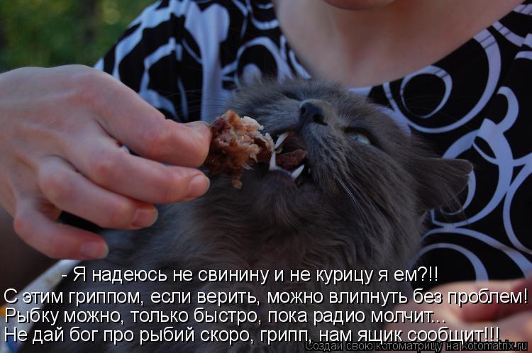 Котоматрица: - Я надеюсь не свинину и не курицу я ем?!!  С этим гриппом, если верить, можно влипнуть без проблем! Рыбку можно, только быстро, пока радио молчи