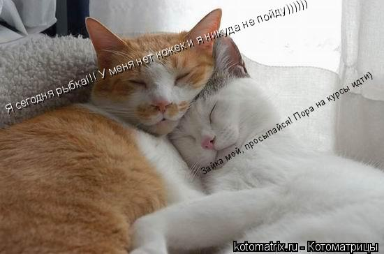 Котоматрица: Зайка мой, просыпайся! Пора на курсы идти) Я сегодня рыбка!!! У меня нет ножек и я никуда не пойду))))))