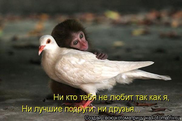 Котоматрица: Ни кто тебя не любит так как я, Ни лучшие подруги, ни друзья...