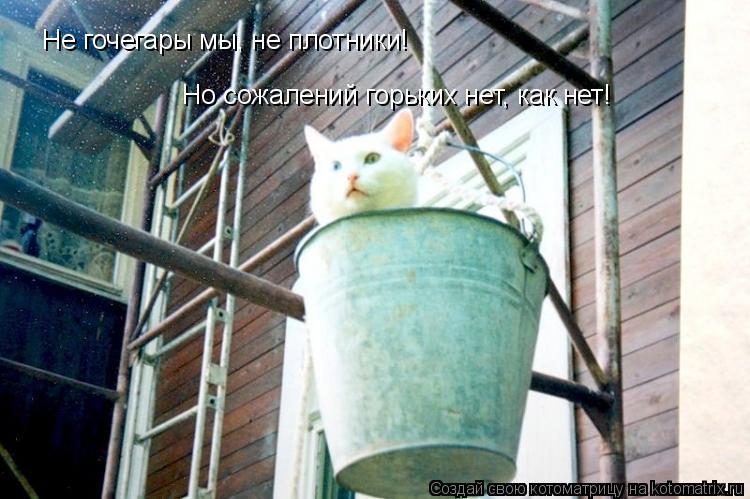 Котоматрица: Не гочегары мы, не плотники! Но сожалений горьких нет, как нет!