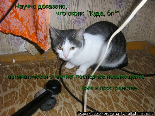 """Котоматрица: Научно доказано,  что окрик :""""Куда, бл*"""" автоматически отменяет последнее перемещение кота в пространстве"""