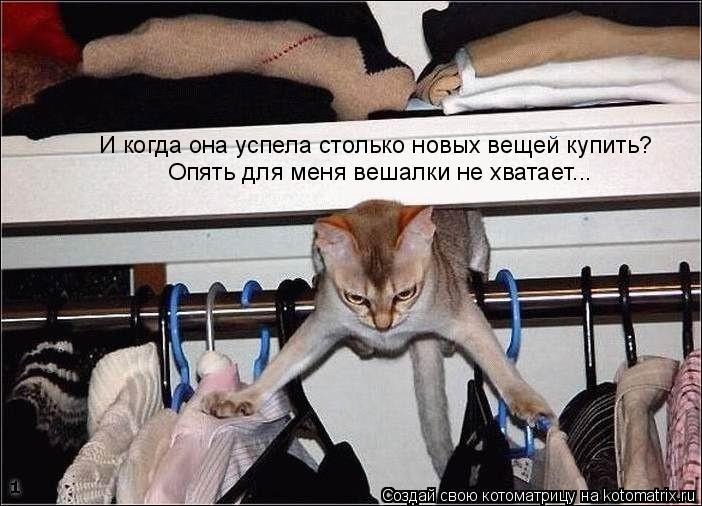 Котоматрица: И когда она успела столько новых вещей купить? Опять для меня вешалки не хватает...