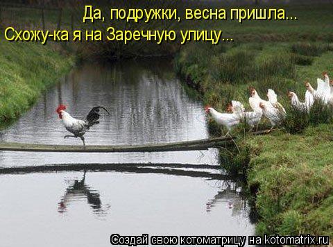 Котоматрица: Да, подружки, весна пришла... Схожу-ка я на Заречную улицу...
