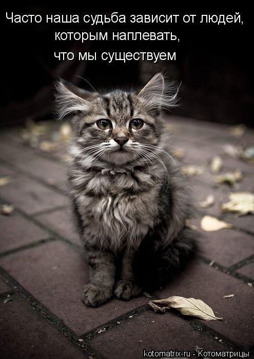 http://kotomatrix.ru/images/lolz/2009/05/13/_g.jpg