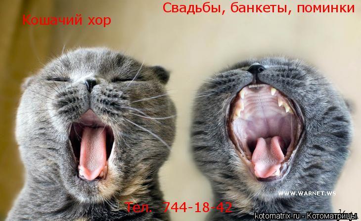 Котоматрица: Кошачий хор Свадьбы, банкеты, поминки Тел.  744-18-42